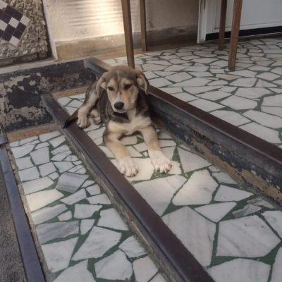 Hund aus Tierschutz Rumänien adoptieren Welpe Mila