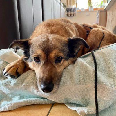 Hund aus Tierschutz Rumänien in Deutschland Beti