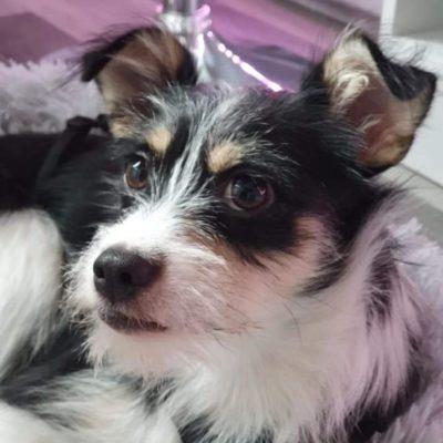 Hund aus Tierschutz Rumänien adoptieren Welpe Elsa