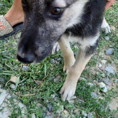 Hund aus Tierschutz Rumänien adoptieren Vanja