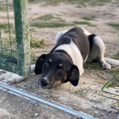 Hund aus Tierschutz Rumänien adoptieren Melody
