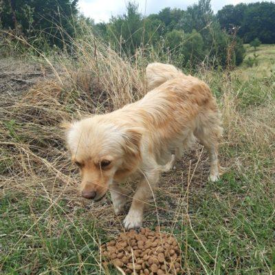 Hund aus Tierschutz Rumänien adoptieren Mira
