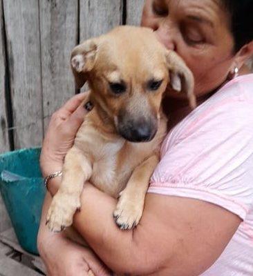 Hund aus Tierschutz Rumänien Welpe adoptieren Bolt