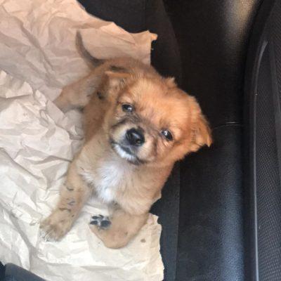 Hund aus Tierschutz Rumänien adoptieren Welpe Klausi