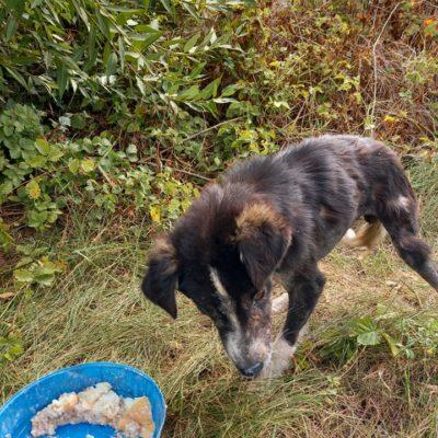 Hund aus Tierschutz Rumänien adoptieren Mäx