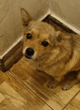 Hund aus Tierschutz Rumänien adoptieren Sqirry