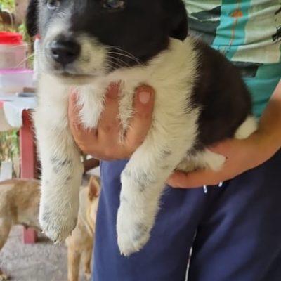 Hund aus Tierschutz Rumänien adoptieren Welpe Kira