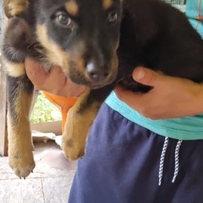 Hund aus Tierschutz Rumänien adoptieren Welpe Karlo