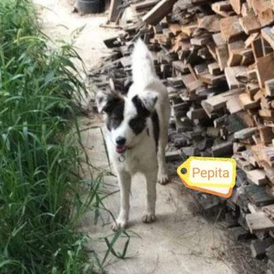 Hund aus Tierschutz Rumänien adoptieren Pepita