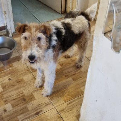 Hund aus Tierschutz Rumänien adoptieren Strubbl