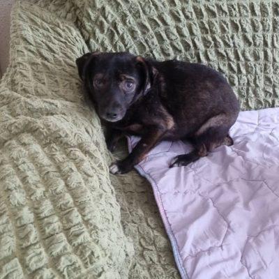 Hund aus Tierschutz adoptieren Rumänien Sweety